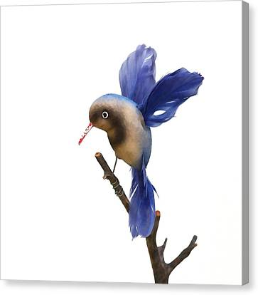 Vintage Blue Hummingbird Canvas Print by Art Block Collections