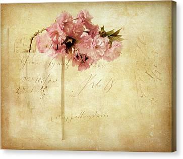 Vintage Cherry Canvas Print by Jessica Jenney