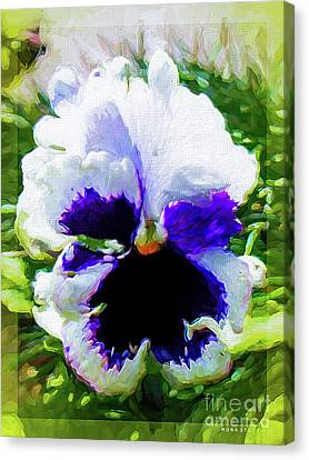 Viola Orchid Tricolore Canvas Print by Mona Stut