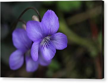 Violet Flowers Canvas Print by Craig Strand
