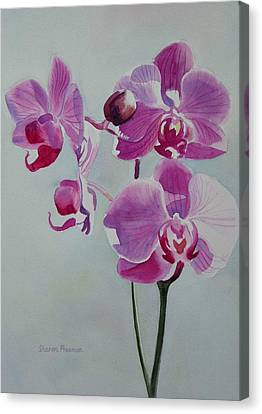 Violet Orchid Canvas Print by Sharon Freeman