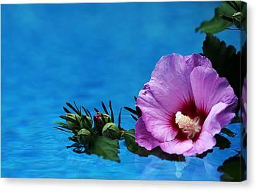 Violet Satin Canvas Print by Debbie Oppermann