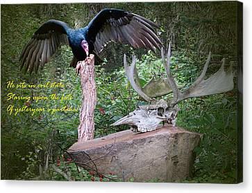 Vulture With Skull Photograph By Phyllis Taylor