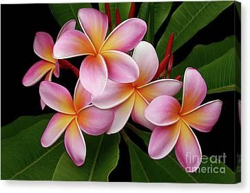 Wailua Sweet Love Texture Canvas Print by Sharon Mau