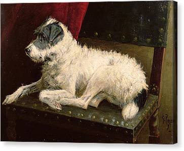 Waiting For Master Canvas Print by George Paice