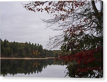 Walden Pond Fall Foliage Le 2aves Concord Ma Canvas Print by Toby McGuire