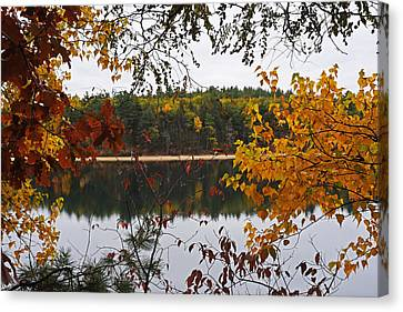 Walden Pond Fall Foliage Leaves Concord Ma Canvas Print by Toby McGuire