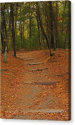 Walden Pond Path Into The Forest Canvas Print by Toby McGuire