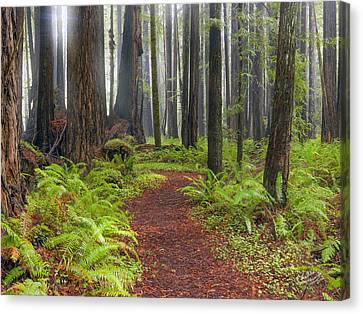 Walk In The Woods 2 Canvas Print by Leland D Howard