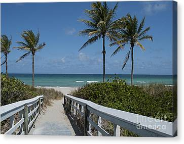 Walkway To The Beach Canvas Print by Juli Scalzi