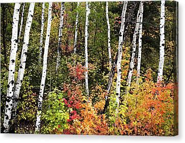 Warm Autumn Canvas Print by David Millenheft