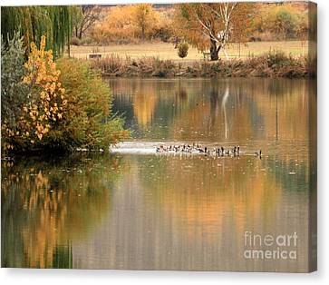 Warm Autumn River Canvas Print by Carol Groenen