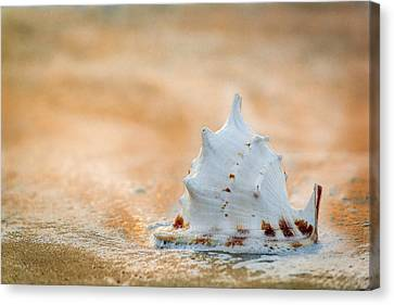 Washed Up Canvas Print by Sebastian Musial