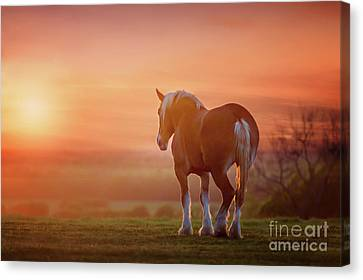 Watching The Sunset Canvas Print by Tamyra Ayles