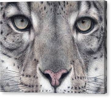 Watching You...snow Leopard Canvas Print by Pat Erickson