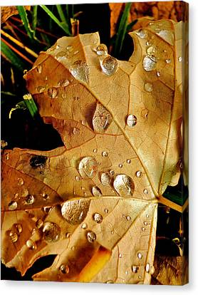 Water Drops Canvas Print by Liz Vernand