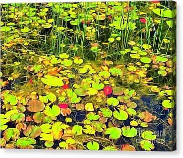 Water-lilie Island Canvas Print by Helene Guertin
