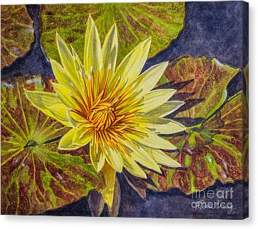 Water Lilies 2 Canvas Print by Fiona Craig