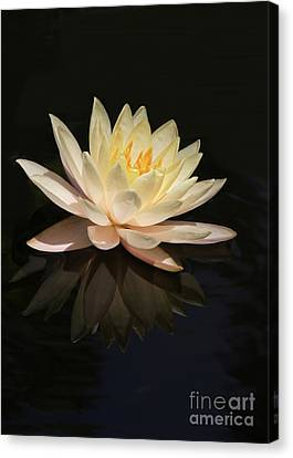 Water Lily Reflected Canvas Print by Sabrina L Ryan