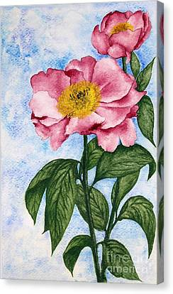 Watercolor Painting Of Two Camellia Flowers Canvas Print by Evelyn Sichrovsky