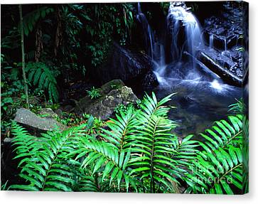 Waterfall El Yunque National Forest Canvas Print by Thomas R Fletcher