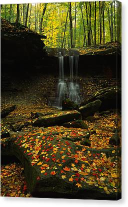 Waterfall In A Forest, Blue Hen Falls Canvas Print by Panoramic Images