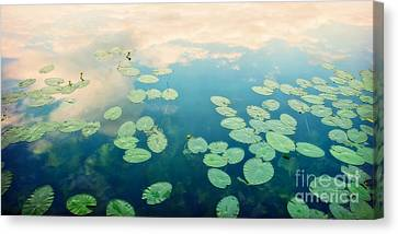 Waterlilies Home Canvas Print by Priska Wettstein