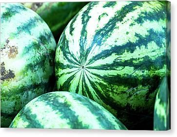 Watermelon Love Canvas Print by Teri Virbickis