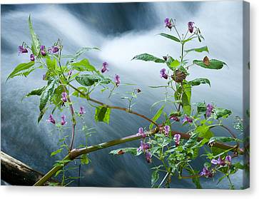 Waterscapes - Lilac Blossom Canvas Print by Andy-Kim Moeller