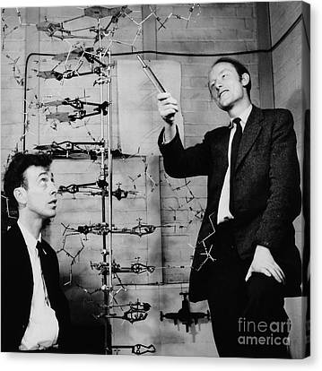 Watson And Crick Canvas Print by A Barrington Brown and Photo Researchers