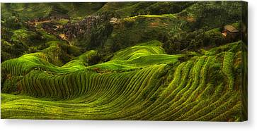 Waves Of Rice - The Dragon's Backbone Canvas Print by Max Witjes
