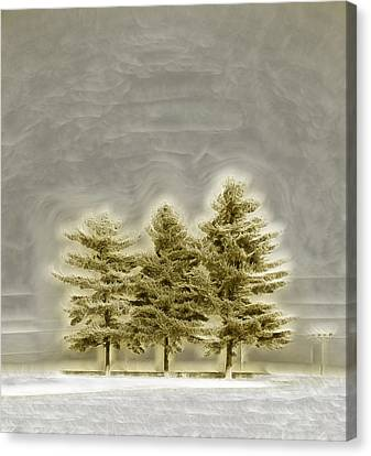 We Three Trees Canvas Print by Bill Tiepelman