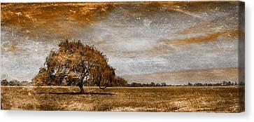 Weathered Canvas Print by Az Jackson