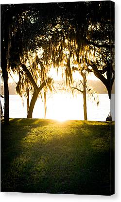 Spanish Moss At Sunset Canvas Print by Shelby Young