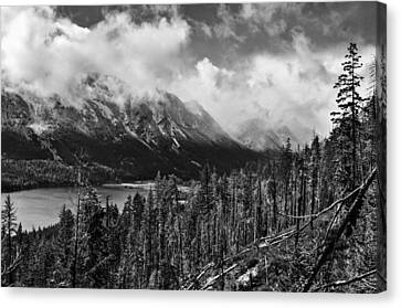 Wenatchee National Forest Black And White Canvas Print by Pelo Blanco Photo