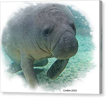 West Indian Manatee Canvas Print by Larry Linton