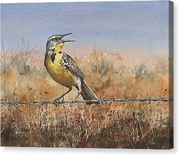 Western Meadowlark Canvas Print by Sam Sidders