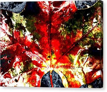 Wet Single Leaf Canvas Print by Beth Akerman