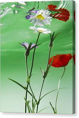 Wet Wild Flower Canvas Print by Han Van Vonno