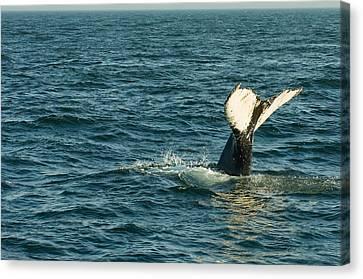 Whale Canvas Print by Sebastian Musial