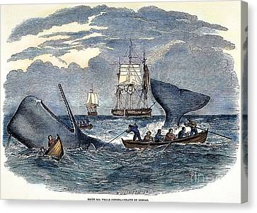 Whaling In South Pacific Canvas Print by Granger