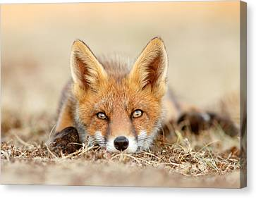 What Does The Fox Think? Canvas Print by Roeselien Raimond