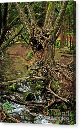 Where The Ents Are Canvas Print by Angel  Tarantella