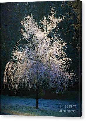 Whimsical Winter Willow Canvas Print by Teresa A Lang