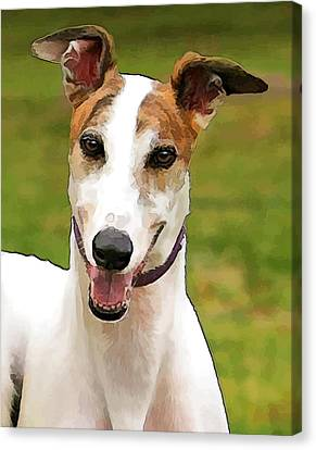 White And Tan Greyhound Canvas Print by Elaine Plesser