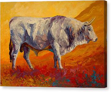 White Bull Canvas Print by Marion Rose