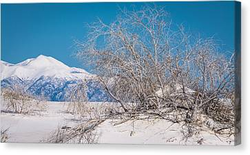 White Desert Canvas Print by Racheal Christian