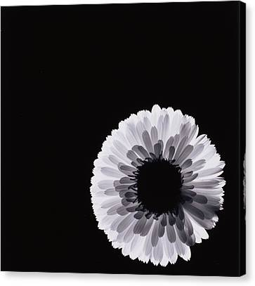 White Flower Canvas Print by Graeme Harris