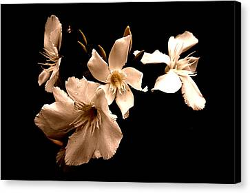 White Flowers In Cream Canvas Print by Angie Wingerd