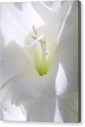 White Gladiola Flower Macro Canvas Print by Jennie Marie Schell